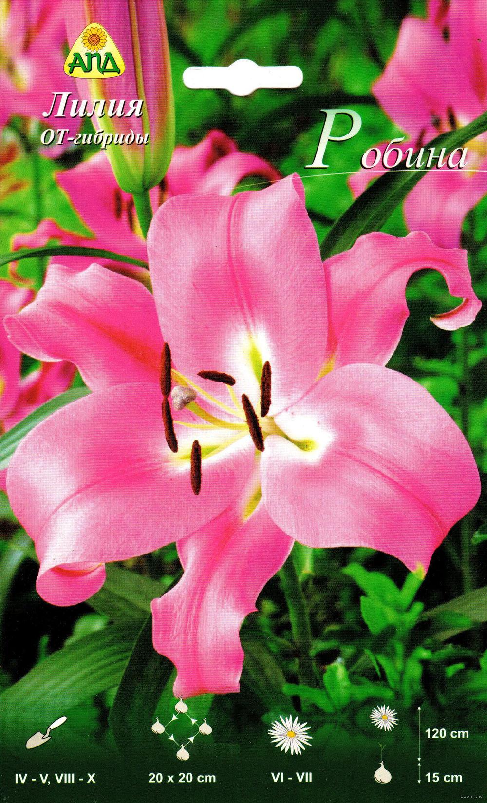 Купить лилии луковицы интернет магазин осенью у есиповой