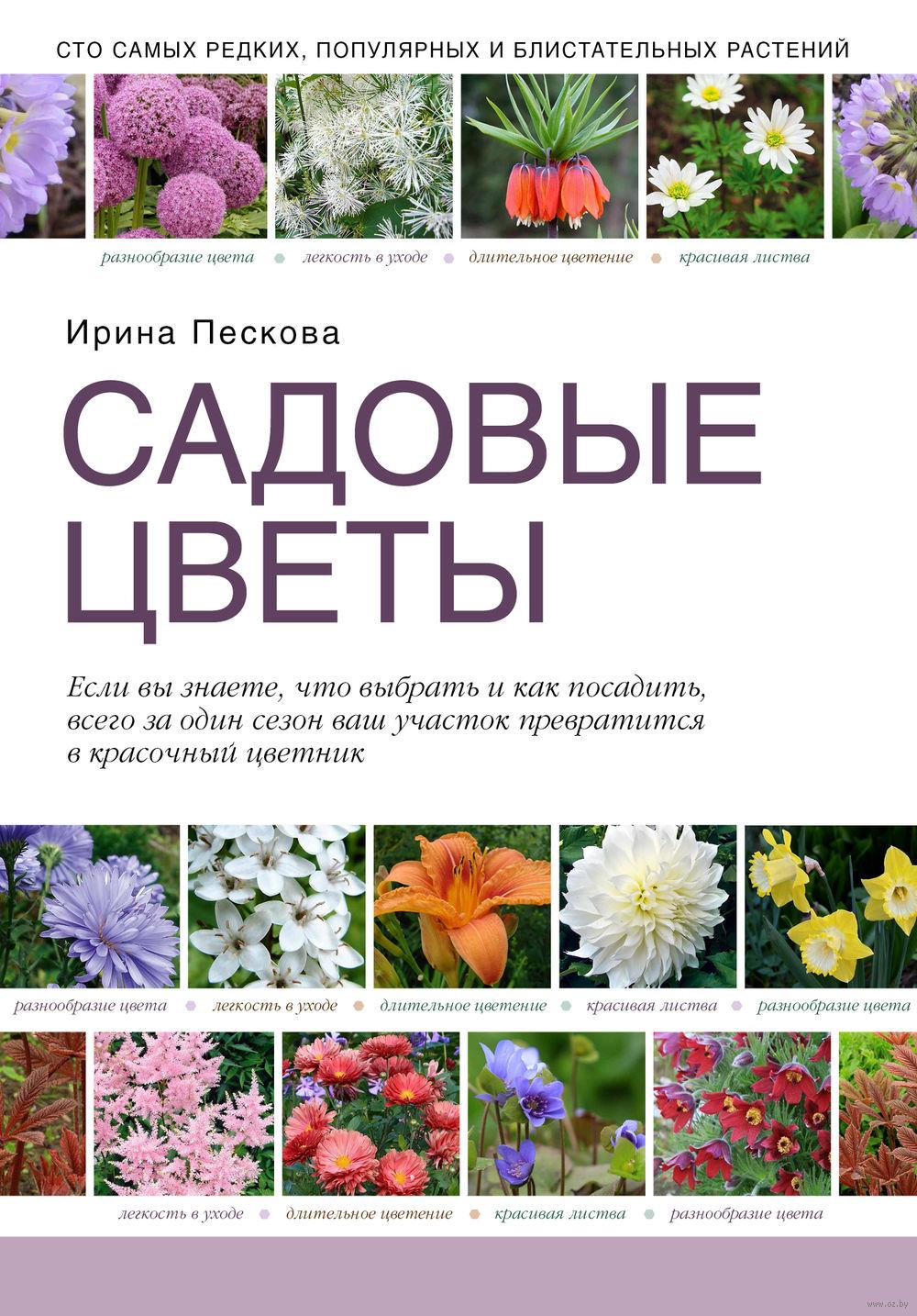 Купить садовые цветы в минске