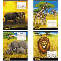 """Тетрадь в линейку """"Африка"""" 12 листов"""