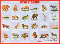 Животные. Плакат