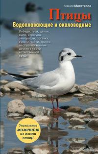 Птицы. Водоплавающие и околоводные. Ксения Митителло