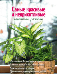 Самые красивые и неприхотливые комнатные растения