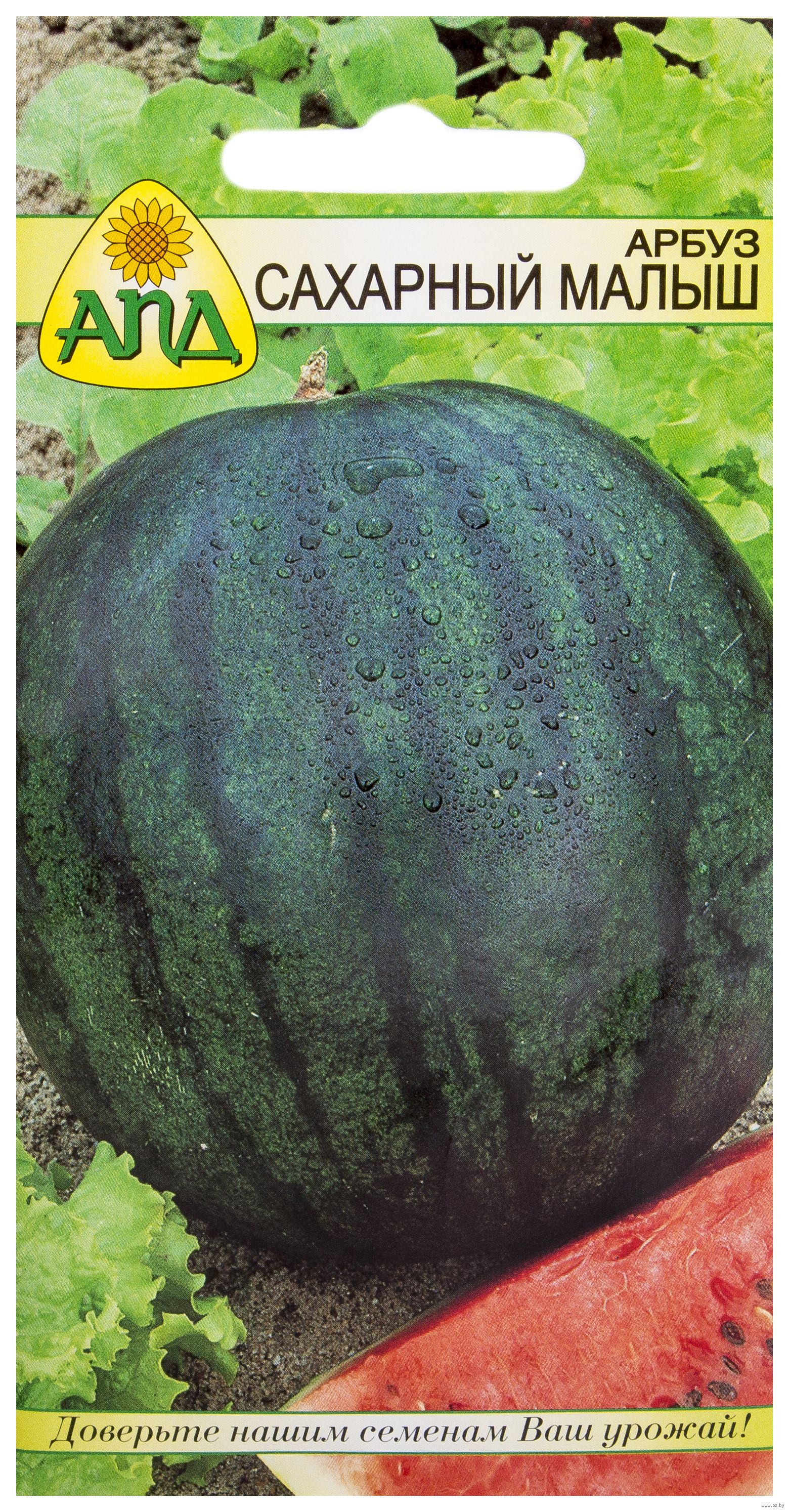Как сделать свои семена арбуза 198
