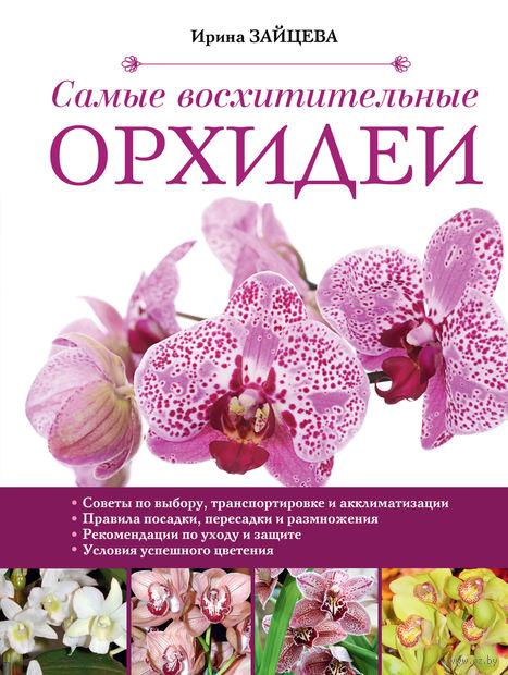 Самые восхитительные орхидеи. Ирина Зайцева