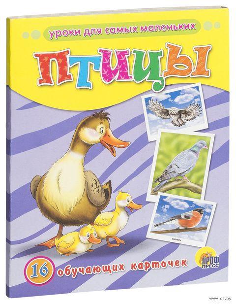 Птицы. 16 обучающих карточек