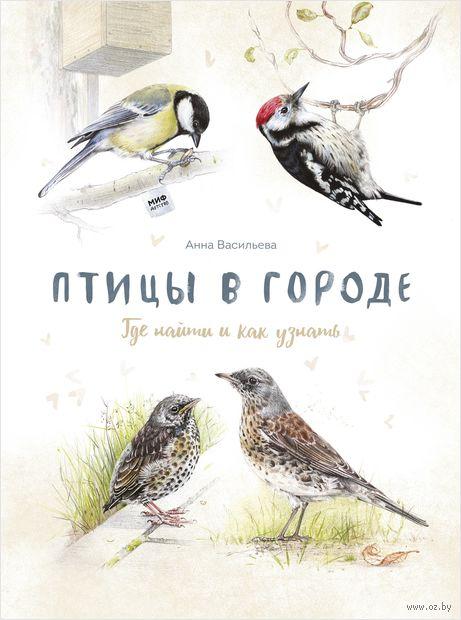 Птицы в городе. Где найти и как узнать — фото, картинка