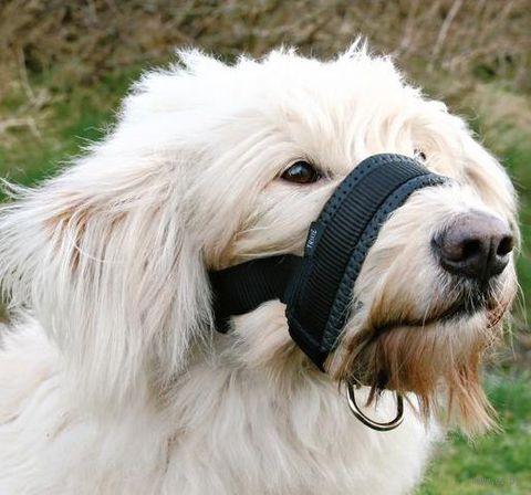 Недоуздок для собак нейлоновый регулируемый (размер XXL; 28-38 см/22-35 см)