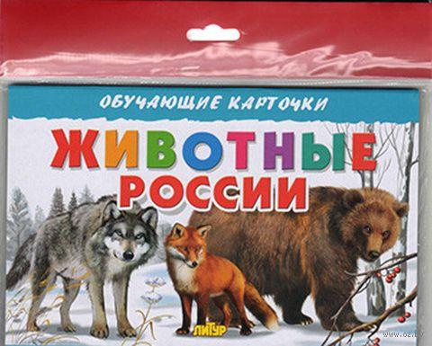 Животные России. Карточки (европодвес) — фото, картинка