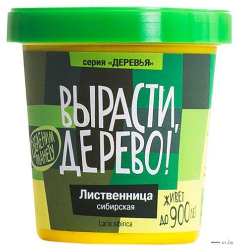 """Набор для выращивания растений """"Лиственница сибирская"""" — фото, картинка"""