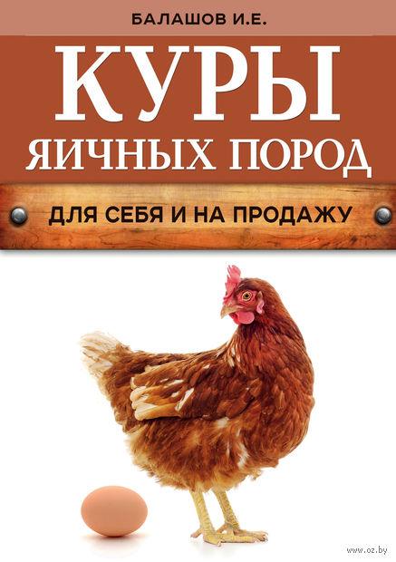 Куры яичных пород. Иван Балашов