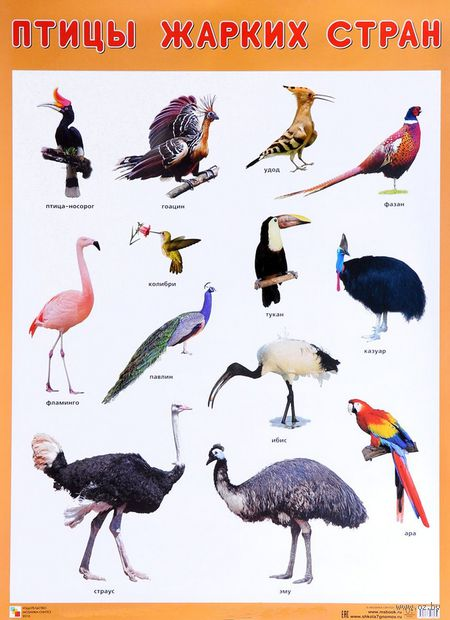 Птицы жарких стран. Плакат — фото, картинка
