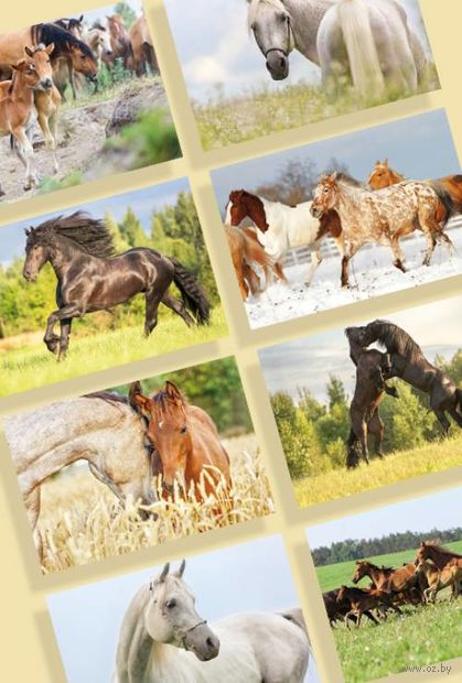 "Набор открыток ""Лошади"" (21 шт.) — фото, картинка"