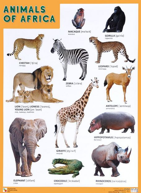 Animals of Africa. Плакат