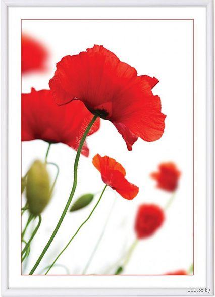 "Фоторамка пластиковая ""Poster lux white"" (21x29,7 см) — фото, картинка"