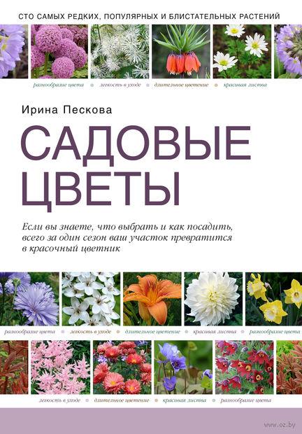 Садовые цветы. Ирина Пескова