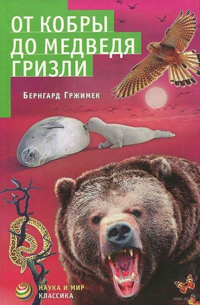 От кобры до медведя гризли — фото, картинка
