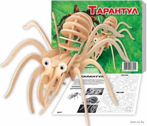"""Сборная деревянная модель """"Тарантул малый"""" — фото, картинка"""