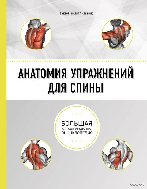 Анатомия упражнений для спины — фото, картинка