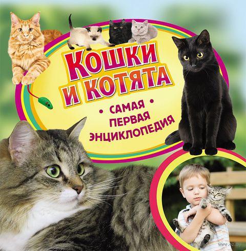 Кошки и котята — фото, картинка