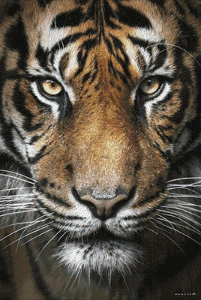 "Алмазная вышивка-мозаика ""Вождь тигров"" (680х1000 мм) — фото, картинка"