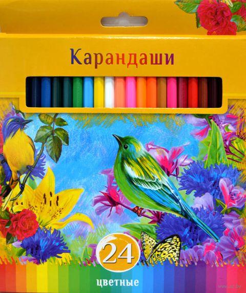 """Набор карандашей цветных """"Солнечный креатив"""" (24 цвета)"""