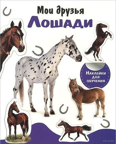Мои друзья лошади — фото, картинка