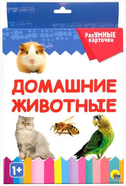 Разумные карточки. Домашние животные — фото, картинка