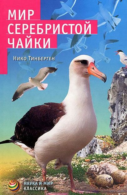 Мир серебристой чайки — фото, картинка