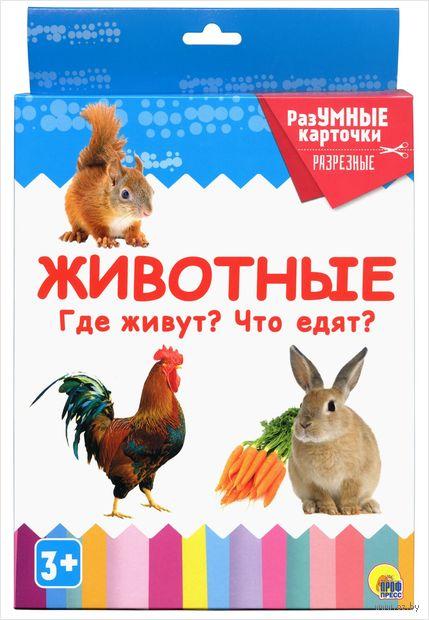 Разумные карточки. Животные. Где живут? Что едят? — фото, картинка
