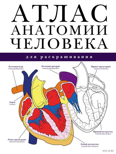 Атлас анатомии человека для раскрашивания — фото, картинка