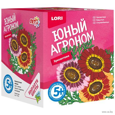 """Набор для выращивания растений """"Хризантема"""" — фото, картинка"""