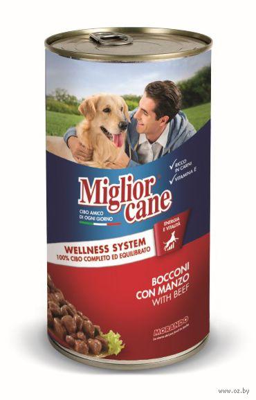 """Консервы для собак """"Cane"""" (1,25 кг; говядина) — фото, картинка"""
