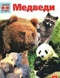 Медведи — фото, картинка