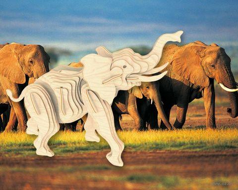 """Сборная деревянная модель """"Слон"""" — фото, картинка"""