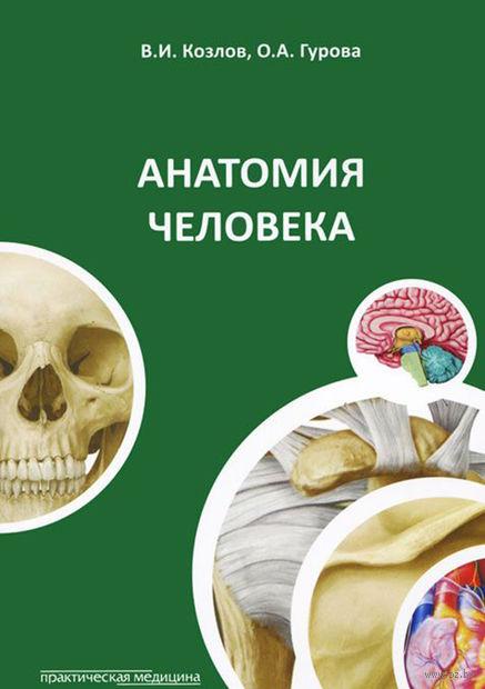 Анатомия человека. Валентин Козлов, Ольга Гурова