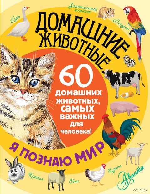 Домашние животные — фото, картинка