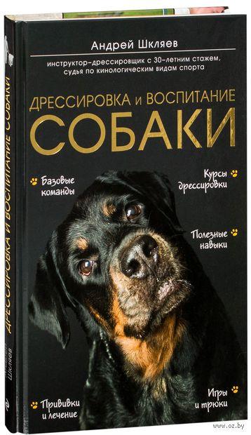 Дрессировка и воспитание собаки — фото, картинка