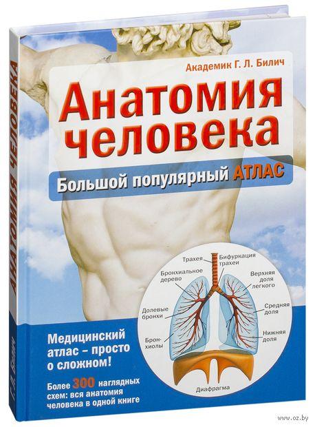 Анатомия человека. Большой популярный атлас. Габриэль Билич