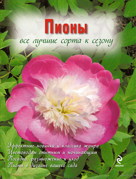 Пионы. Анна Рубинина