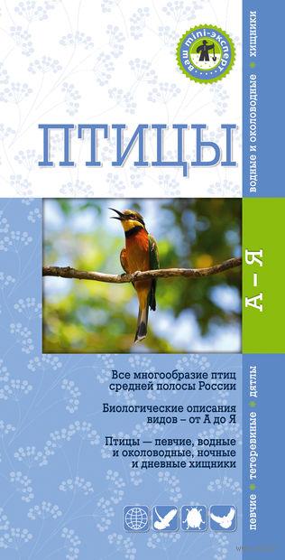 Птицы. Краткий карманный определитель. К. Митителло