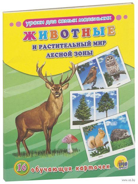Животные и растительный мир лесной зоны