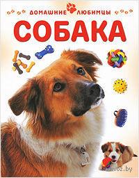 Собака. Мэтью Рейнер