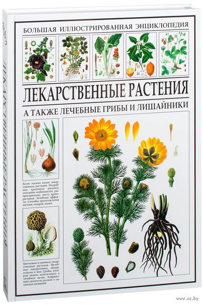Лекарственные растения. Энциклопедия — фото, картинка