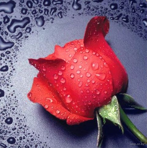 "Алмазная вышивка-мозаика ""Красная Роза"" (220х240 мм) — фото, картинка"