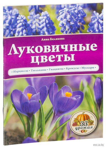 Луковичные цветы. Анна Белякова