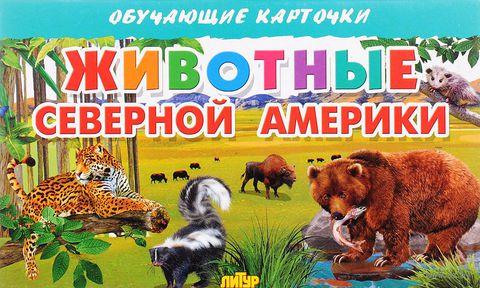 Животные Северной Америки (набор из 16 карточек) — фото, картинка