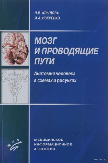 Мозг и проводящие пути. Анатомия человека в схемах и рисунках. Н. Крылова, Ирина Искренко